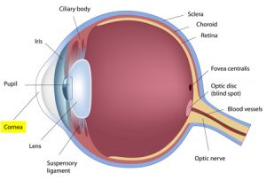 Corneal Disease Treatment in Murrieta